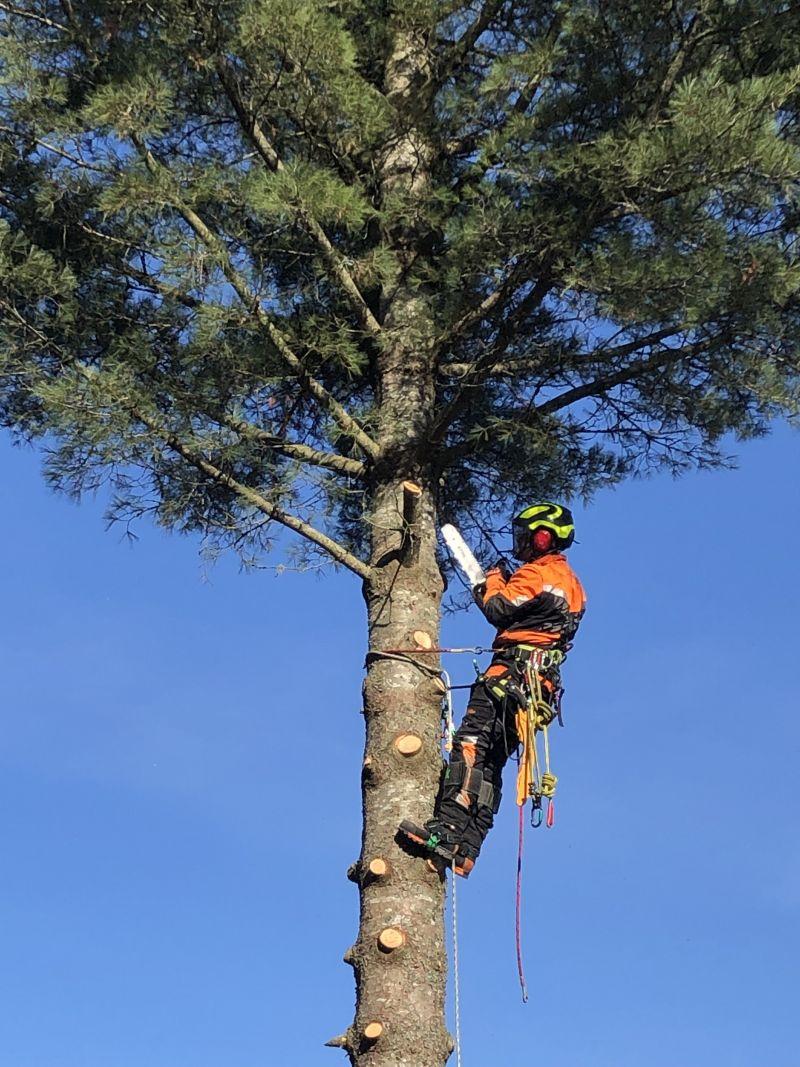 Pihapuiden kaato ja puun kaato Hyvinkäällä ja Hämeenlinnassa